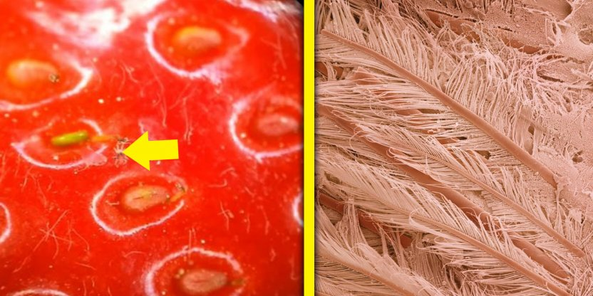 9 Popular food under the microscope!