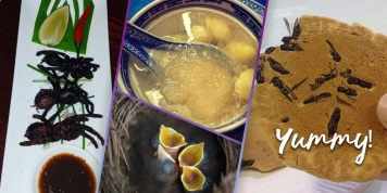 9 Weirdest foods around the world!