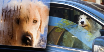 Don't leave dogs in hot cars! The experiment shows terrible truth...