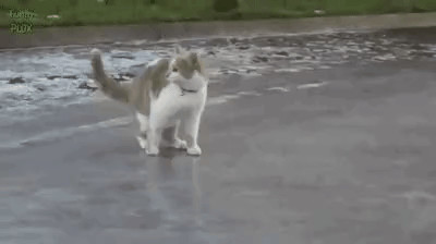 What is this cat doing?