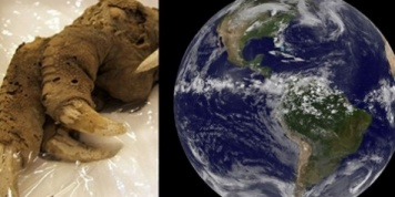 9 Strangest things ever found on Earth!