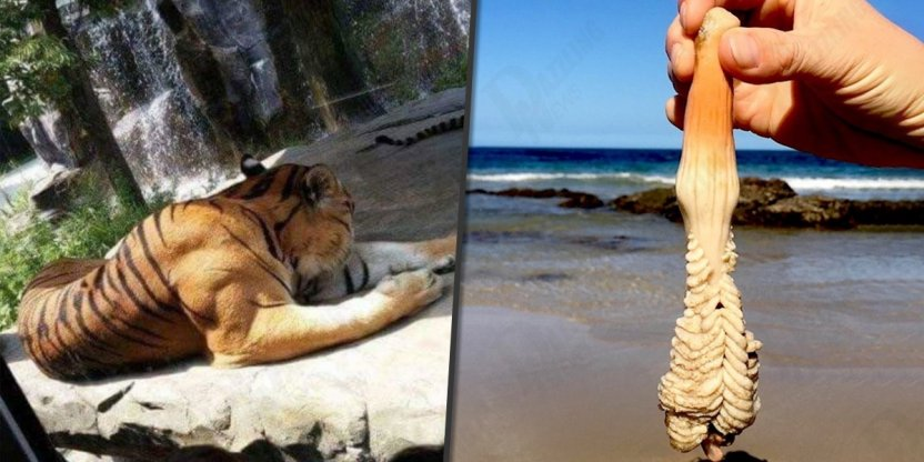 15 Amazing findings that nobody can explain...