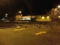 11. A terrifying meeting of crows…