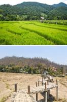 8. My girlfriend and I traveled to Thailand to see the rice fields, but we didn't realize that there was a dry season