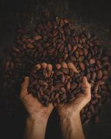 Cacao was once used as currency