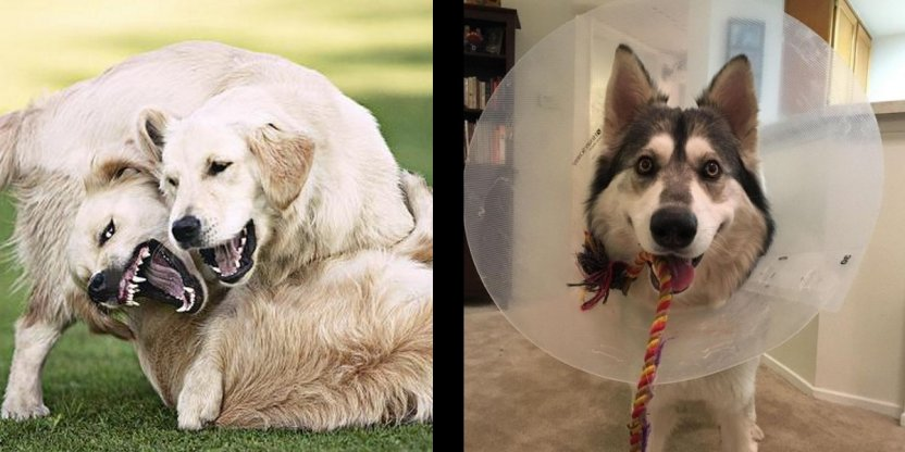 This might just save your pet dog during a dog fight